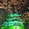 高田公園(高田城)の夜桜の見頃は?北陸新幹線で見に行こう!