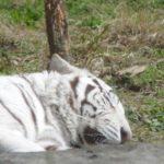 平川動物公園の見所は?動物の赤ちゃんは何がいる?ふれあいや餌やりもできるの?